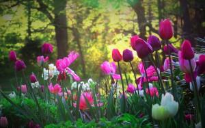 6915713-tulips-flower-garden-1